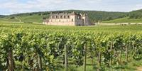 Wine Tours in Europe