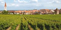 Exploring vineyards and small villages in Alsace