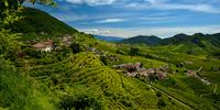 The hills of Prosecco produce the original Prosecco wine
