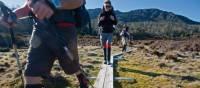 Walkers hiking near Wild Dog Creek Campsite in Walls of Jerusalem | Don Fuchs
