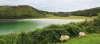 Serene landscapes for grazing | Scott Kirchner