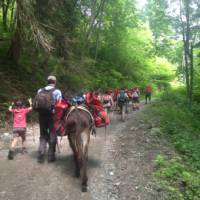 Family group hiking with donkeys around Mont Blanc   Kate Baker
