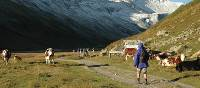 Walking up the wide alpine Valley de la Lee Blanche in Italy on our Tour du Mont Blanc |  <i>Philip Wyndham</i>