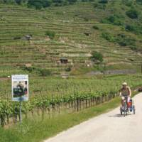 Cycling with trailer in the Wachau Valley, Austria   Kate Baker