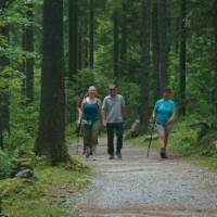 Hikers in forest, Salzkammergut   Kate Baker