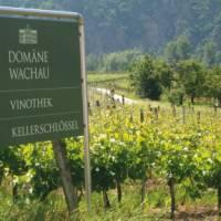 Vineyard in the Wachau Valley, Austria   Kate Baker