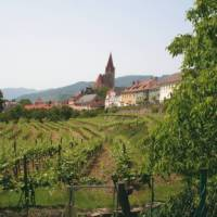 Wine growing village in the Wachau Valley, Austria   Kate Baker