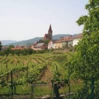 Wine growing village in the Wachau Valley, Austria | Kate Baker