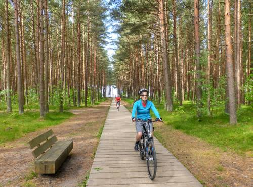 Our Baltic coast cycle will take you through Lithuania's lush northern pine forests&#160;-&#160;<i>Photo:&#160;Gesine Cheung</i>