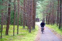 Scenic cycling through pine forests in Lithuania |  <i>Andrew Bain</i>