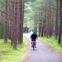 Scenic cycling through pine forests in Lithuania   Andrew Bain