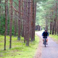 Scenic cycling through pine forests in Lithuania | Andrew Bain