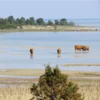 Wildlife near Kassari on Hiiumaa Island, Estonia
