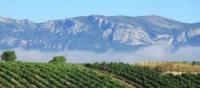 Rioja vineyards   Andreas Holland