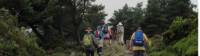 Hiking amongst heather on the Camino, Spain |  <i>Andreas Holland</i>