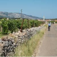Cycling between Stari Grad and Jelsa on the island of Hvar, Croatia   Ross Baker