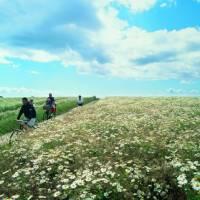 Cycling through the Danish countryside