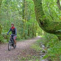 Cycling the magical paths of Rowrah along the Coast to Coast in England | Andrew Bain