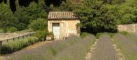The garden Van Gogh looked out on from his room at the psychiatric home in the former monastery St Paul de Mausole, St Remy, Provence. | Rob Allsop