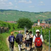Walking the wine trails in Alsace