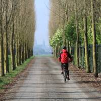 A cyclist on tree lined avenue with Bayeux cathedral in distance   Kate Baker
