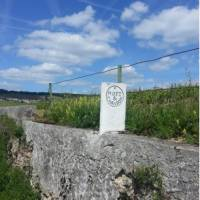 Sample the produce from some of the most famous Champagne houses