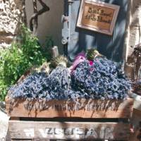 Lavender box, Les Baux, Provence   Rachel Imber