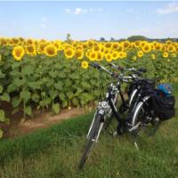 Loire Valley sunflowers near Blois | Mary-Cate Pickett