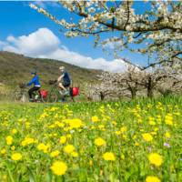 Spring blooming on the Rhone Cycle way in France