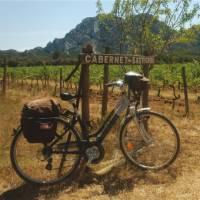 Vineyard in Provence, France   Kate Baker