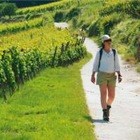 The picturesque region of Alsace is perfectly suited to self guided walking
