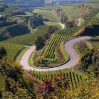 Vineyards near Breisgau alongside the Black Forest | Ernst Wrba