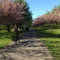 Blossoms in Bloom on the Berlin Wall Trail Cycle | Lizzie Enfield