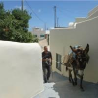A local man navigates the narrow alleys on Pyrgos, Santorini, with his mule | Hetty Schuppert