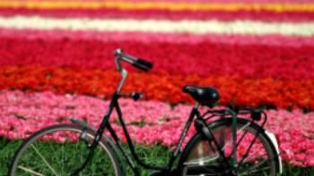 Flower field, Haarlem | NBTC