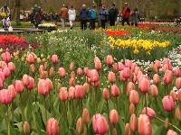 Cycle to the Keukenhof Gardens from Amsterdam |  <i>Richard Tulloch</i>