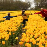 Experience the tulips during Spring when they are in bloom | Richard Tulloch