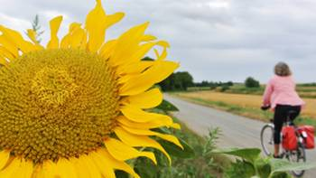 Cycling past sunflowers in Hungary | Lilly Donkers