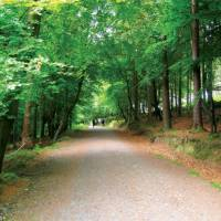 Trekking down the gorgeous Wicklow Way | Nick Kostos