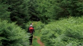Verdant hills of Glencree Valley | Nick Kostos