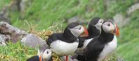 Puffin magic on Skellig Michael | Melanie Moss