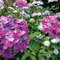 Beautiful flora within Sneem   Nick Kostos
