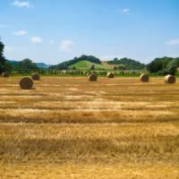 Pass by rural landscapes on your Via Francigena walk