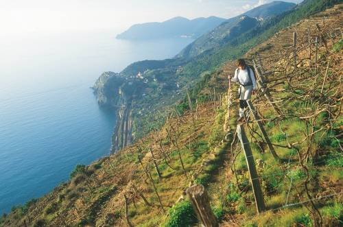 Hiking high above the Ligurian coastline in the Cinque Terre
