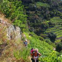 Hikers ascending to Volastra in the Cinque Terre   Phil Wyndham