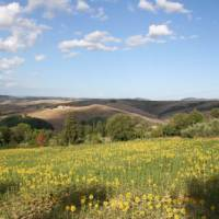 Cycle past these landscapes on the Via Francigena between Pisa and Florence
