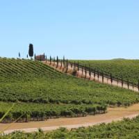 Classic Tuscan landscapes on the Via Francigena near Florence