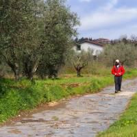 Walking along an original section of the Via Cassia near Montefiasconi | Brad Atwal