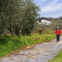 Walking along an original section of the Via Cassia near Montefiasconi   Brad Atwal