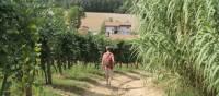 Walking towards a village in Piedmont | Jaclyn Lofts